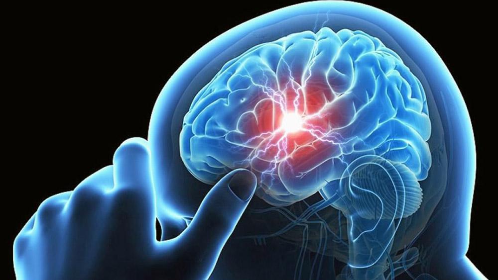 หน้าที่การทำงานของสมอง